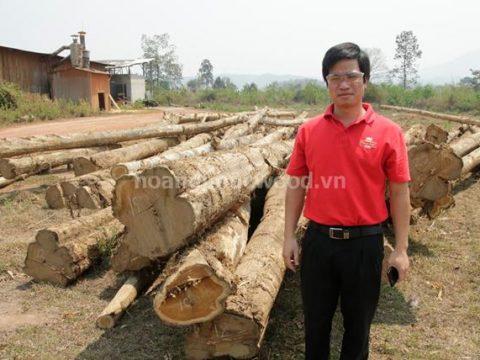 Go nguyen lieu, go teak tron lao, campuchia, myanmar