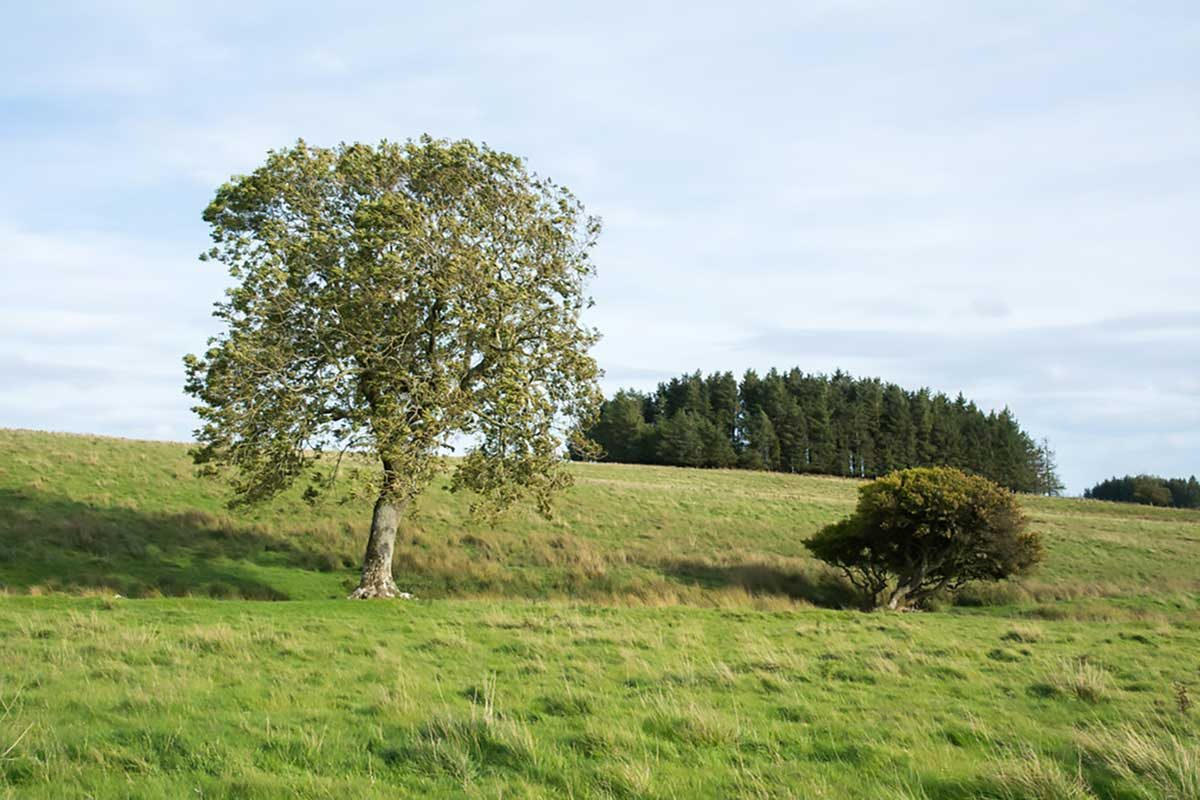 Cây thân gỗ và cây bụi