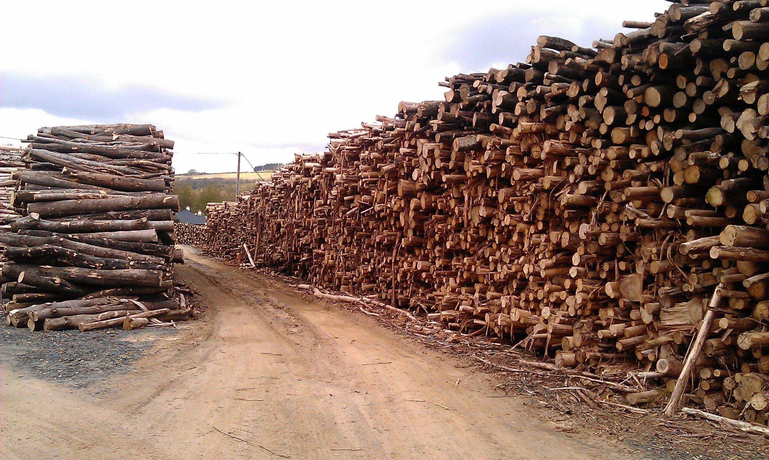 Quang cảnh khai thác gỗ tự nhiên